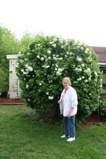 One of her favorite plants, the snowball bush.