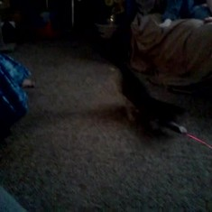 Heres my daddy playing with my for baby Ariel with a laser light when she was a kitten.