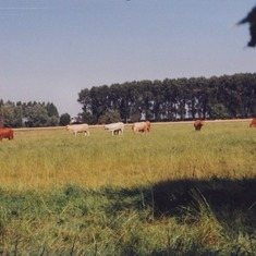 'Cows on the other side, summer is near' by Arnold and Mariette
