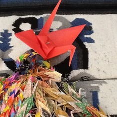 1450 paper cranes folded by Eddie's friends and family while he was in El Camino Hospital 2016 Feb./Mar.