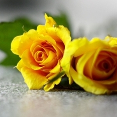 Sweet-couple-of-yellow-rose