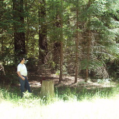 David at Mom's resting place in Big Basin - behind the 3 trees.jpg