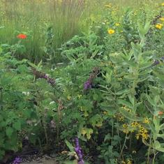 Your bench and beautiful garden with Monarchs - August 2019 - Garden by Kevin Theis