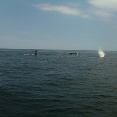 Lots of whales!
